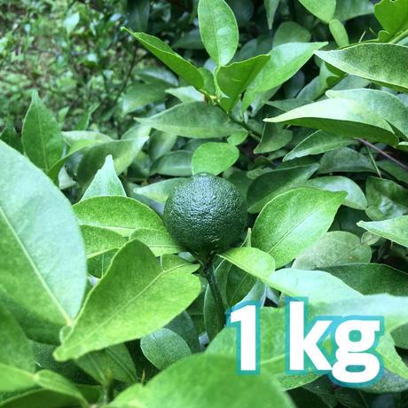 自然栽培 川根本柚子の青柚子 (有機JAS) 1kg