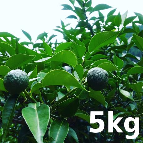 川根本柚子の青柚子(無農薬) 5kg