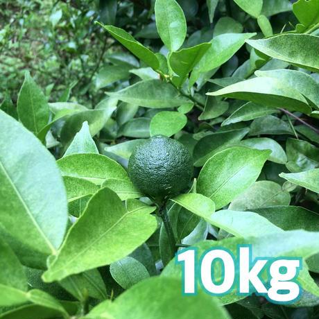 自然栽培 川根本柚子の青柚子 (有機JAS) 10kg