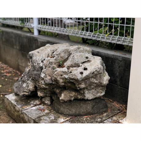 ディキヤーシーサー【ミニ】粟石