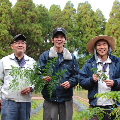 【送料無料】鹿児島県産 モリンガパウダー(1ヵ月セット)