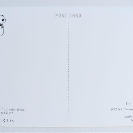 みちのくパンダポストカード(菜の花)