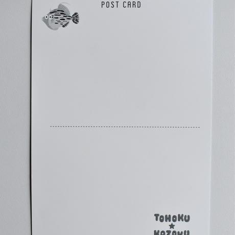 ポストカード(東北のおさかな)