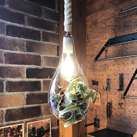 BOTANIC HANGING LIGHT M-FGC