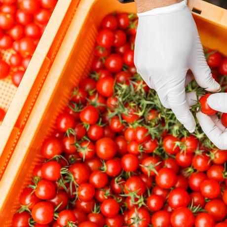 鳥羽農園の手しぼりミニトマトジュース 720ml 2本入り