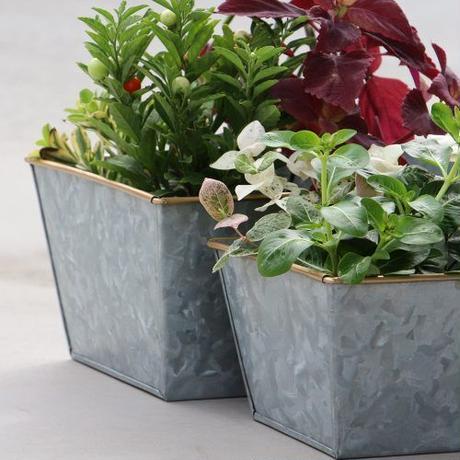 "Galvanized Plant Cover ""Rectangle 26"""