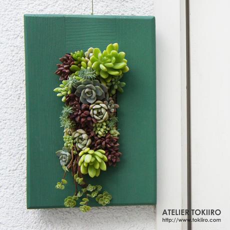 多肉植物のタブロー(TABLEAU)壁掛け A4サイズ(NHK美の壷にて制作と同一サイズ) ※9/1現在、お届けまで1か月-1か月半予定