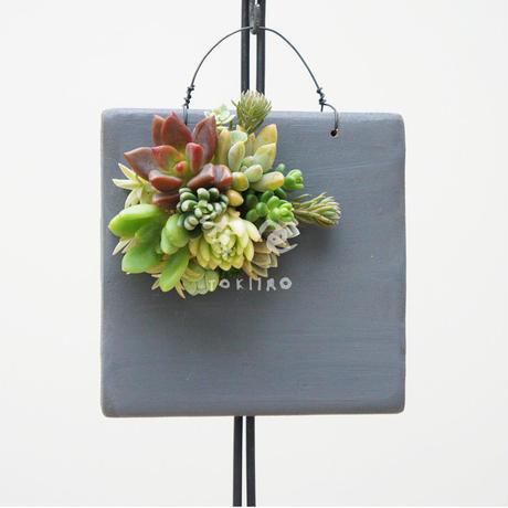多肉植物のタブロー(TABLEAU)壁掛け 10cm×10cm ※9/1現在、お届けまで1か月予定
