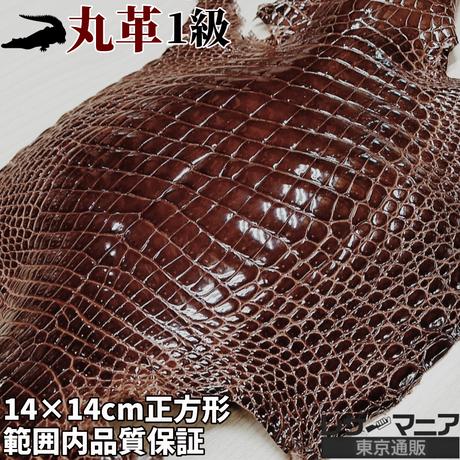 クロコダイル革【一匹】茶【14×14㎝/1級】ツヤ強/8820