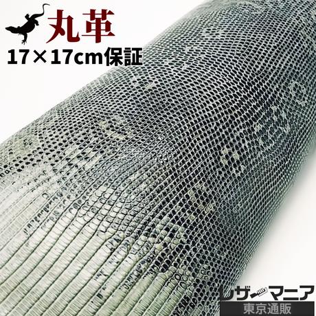 トカゲ革【最大幅20cm前後】セージグリーン×黒/ツヤ強/腹割/ t202
