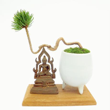 【マイクロ盆栽&仏像(台座付き)】ゴヨウマツ