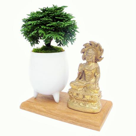 【マイクロ盆栽&仏像(台座付き)】レンザンヒノキ