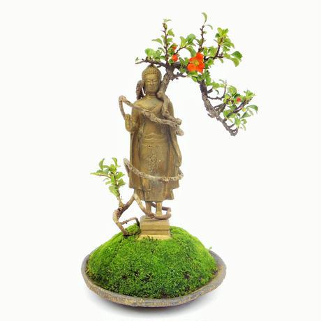 【仏像盆栽】長寿梅