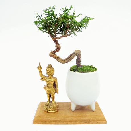 【マイクロ盆栽&仏像(台座付き)】シンパク