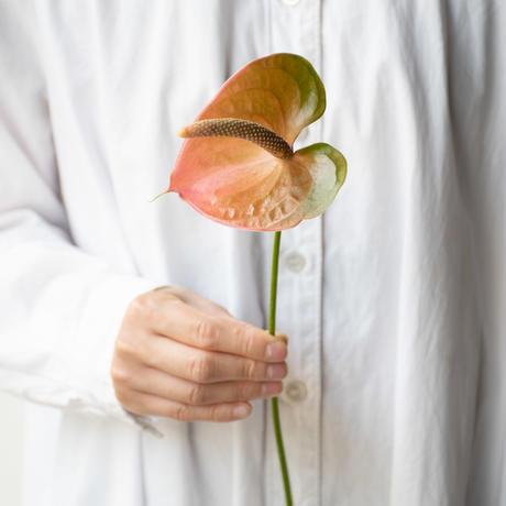 大佐和花卉園のアンスリューム