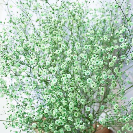 かすみ草「染め5色ミックス」