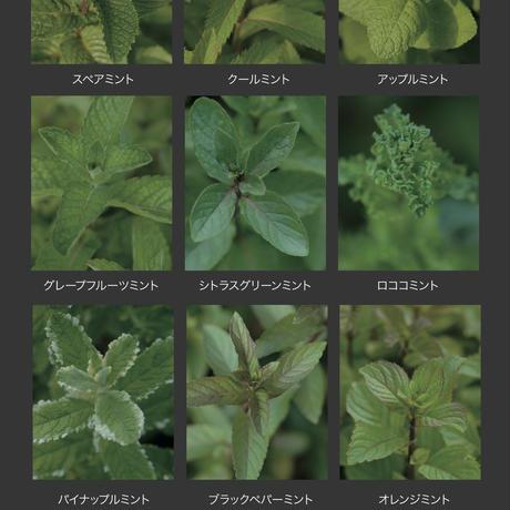 東京植物図譜(2012.4~2017.3)