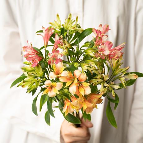 三宅花卉園のアルストロメリアミックス