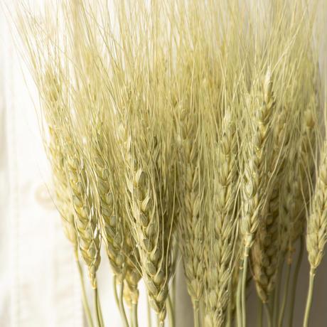 フラワーズフォーレナ「小麦」