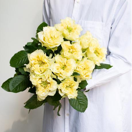 バラ「レモンフォセット」