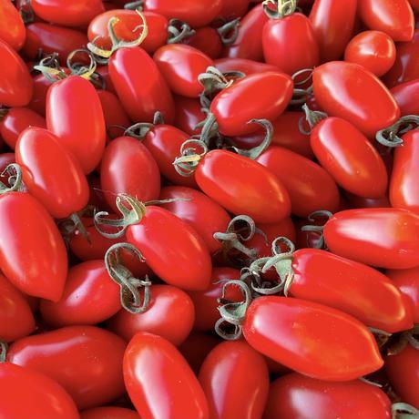 トマトフラガール1箱(約1.5kg) 発送は6月以降になります