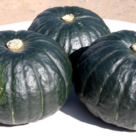 しっとり絶品かぼちゃ!10kg 発送は8月以降になります