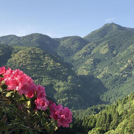 熊本県北山麓日本みつばち菊鹿(晩秋蜜150g)