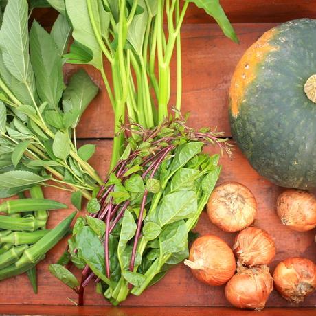 【今季は終了いたしました】【野菜セット】農家のおまかせセット(5〜7品)