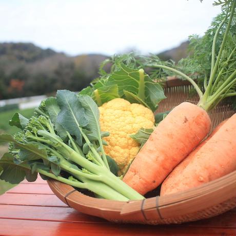 【冬のおすすめ野菜3点セット】ニンジン、カリフラワー、スティックセニョール