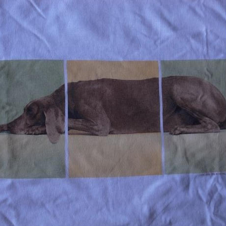 90's USA製 William Wegman Weimaraner LYING DOG フォト Tシャツ S ウィリアム ウェッグマン FOTOFOLIO ワイマナラー犬【deg】