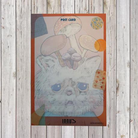 ポストカード tsumuchan(エキゾチックショート)