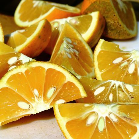 【販売期間 2/1〜4/15】 森果樹園なるとオレンジ10kg