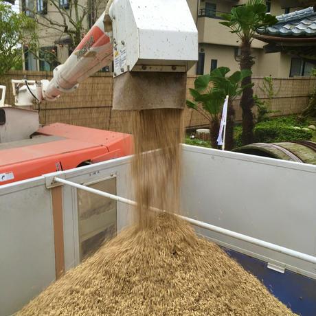 令和2年新米【美人米】玄米10kg 千葉県神崎町産
