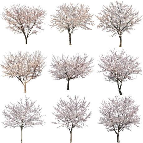 桜 切り抜き素材セット  - Cherry Blossoms   sa_010