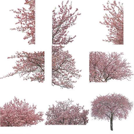 桜 切り抜き素材セット  - Cherry Blossoms   sa_018