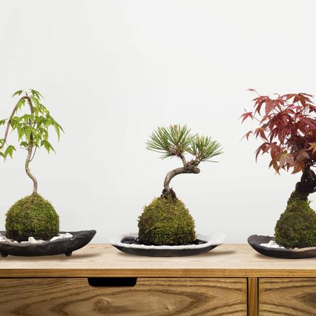 苔玉盆栽切り抜きデータ kokedama02