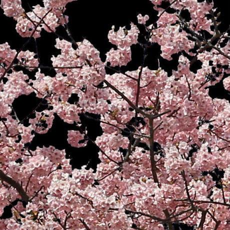 桜 切り抜き素材セット  - Cherry Blossoms   sa_019