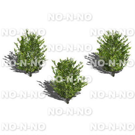 鳥瞰3本樹木 - BirdEye 2b001イヌシデ