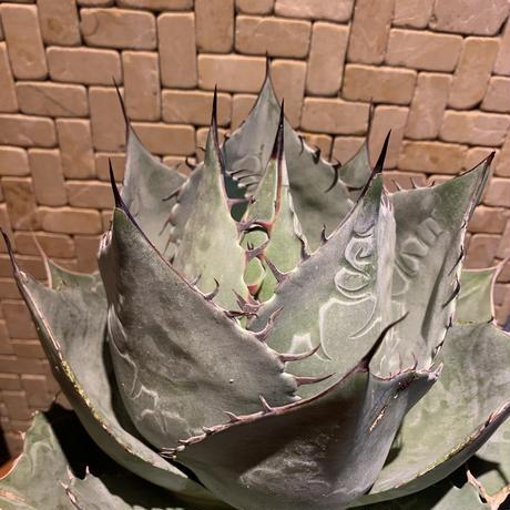 5d54ef0c3a7e963a906777d7