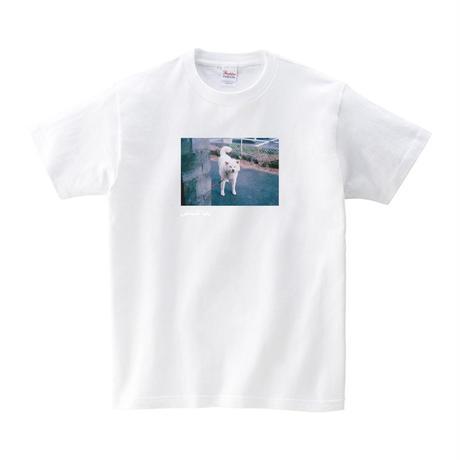 おとうさんTシャツ「まがお」