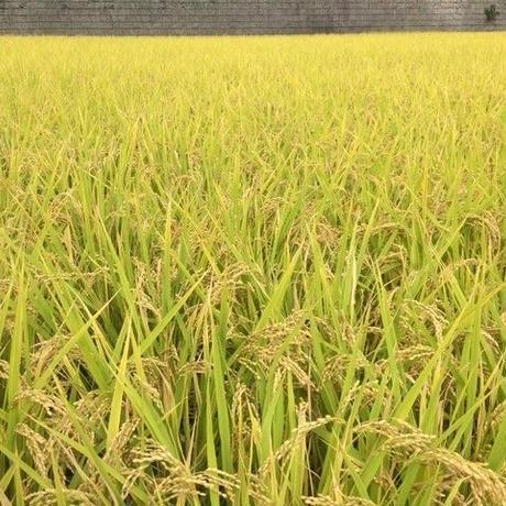 自然栽培米 ヒノヒカリ 玄米5kg 2020年度産