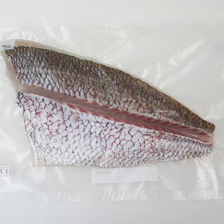 絶品!藤本さんの大鳴海鯛(1〜2人前)