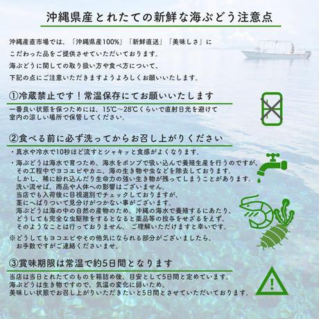 【Directly from Okinawa】Green caviar 3kg