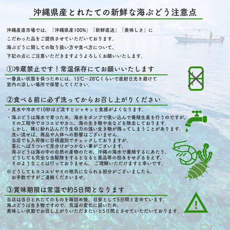 【Directly from Okinawa】Green caviar 500g