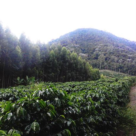 [2020 Taste of the Harvest 6位入賞ロット]100g Brazil Boa Esperanca  Natural / ブラジル ボア・エスペランサ農園 ナチュラル