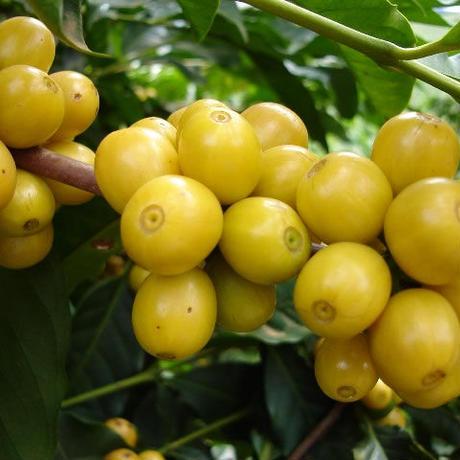 【SPECIALTY COFFEE】250g Brazil Recreio 1.100-1,280m Natural / ブラジル ヘクレイオ ナチュラル