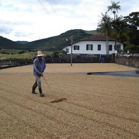 【SPECIALTY COFFEE】500g Brazil Recreio 1.100-1,280m Natural / ブラジル ヘクレイオ ナチュラル