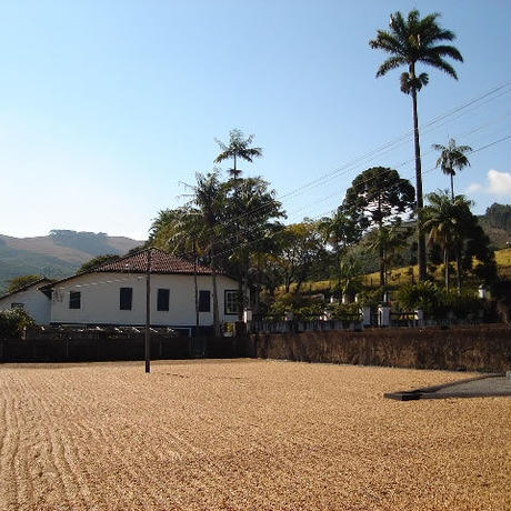 【SPECIALTY COFFEE】100g Brazil Recreio 1.100-1,280m Natural / ブラジル ヘクレイオ ナチュラル