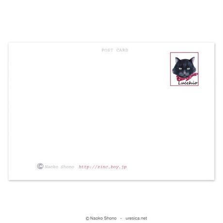 庄野ナホコ「ルッキオとフリフリ」ポストカードセット