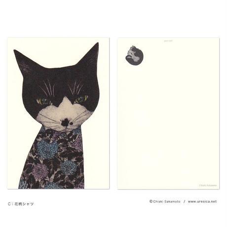 坂本千明 ポストカード(猫)